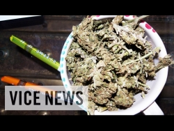 JAMAICAN BUD BUSINESS - SPINGE A LEGALIZZARE